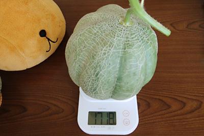 マッチョメロンの体重測定