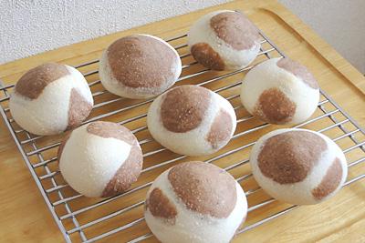 GOPANのお米牛柄ミルククリームパン。ココアバージョンです