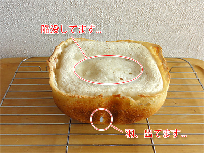 GOPANの米食パンまた失敗。羽がはみ出してるの見えてるし。