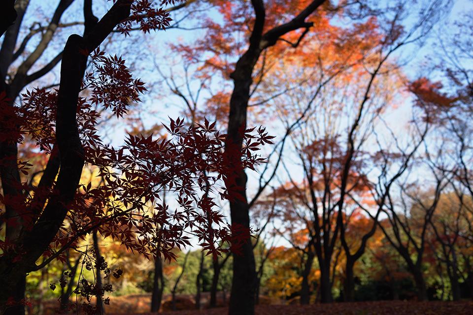 RX1で撮影した紅葉