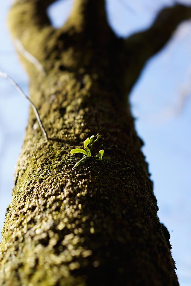 コケと木の芽がかわいい。