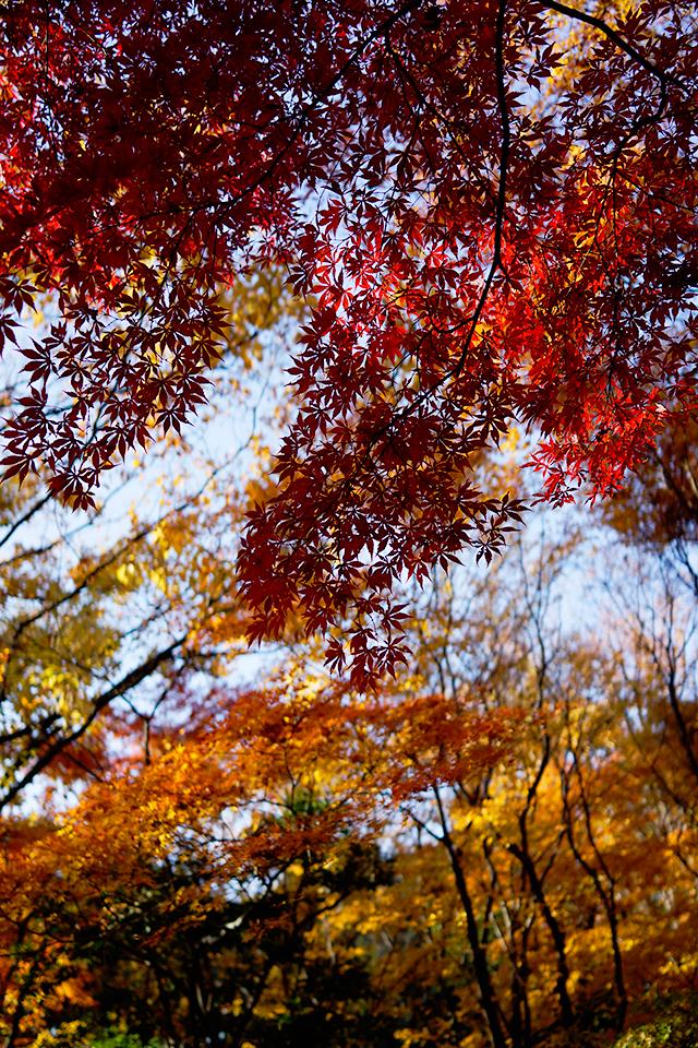 葉の形がくっきり
