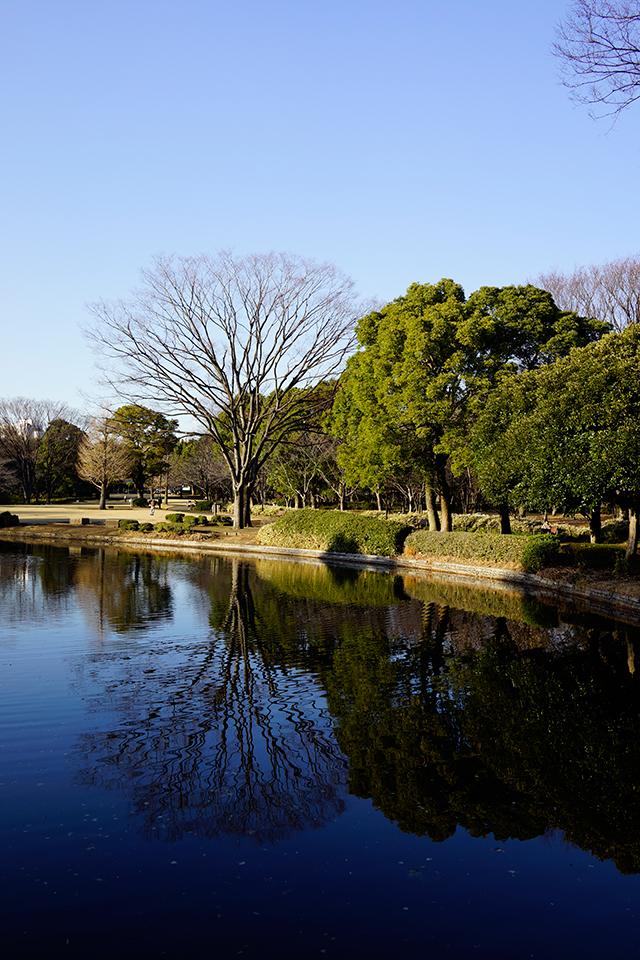 池に映る空の紺色がきれいです。