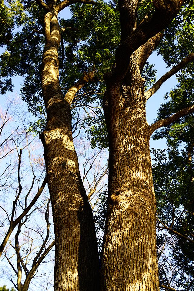 午後の木漏れ日