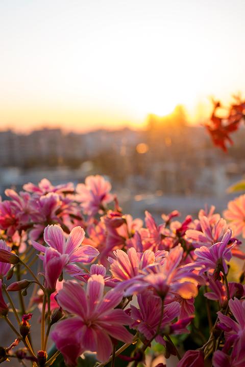 華さんごと夕陽
