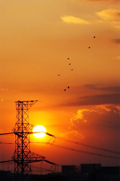 夕陽と鳥さん