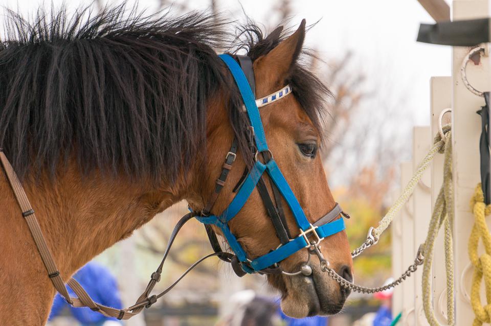 ポニーランドのお馬さん