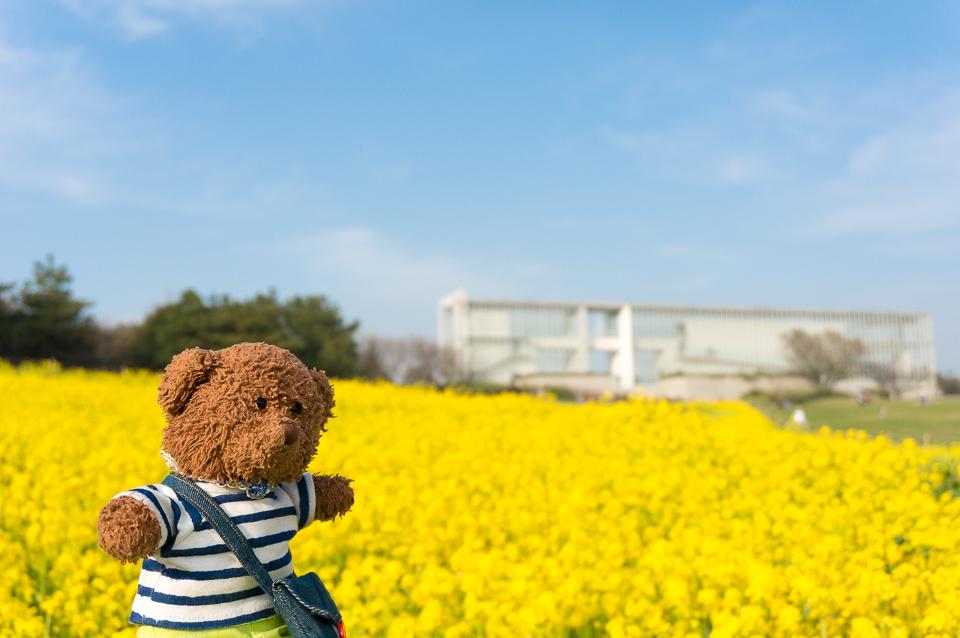 ようこそ!葛西臨海公園の菜の花畑へ!