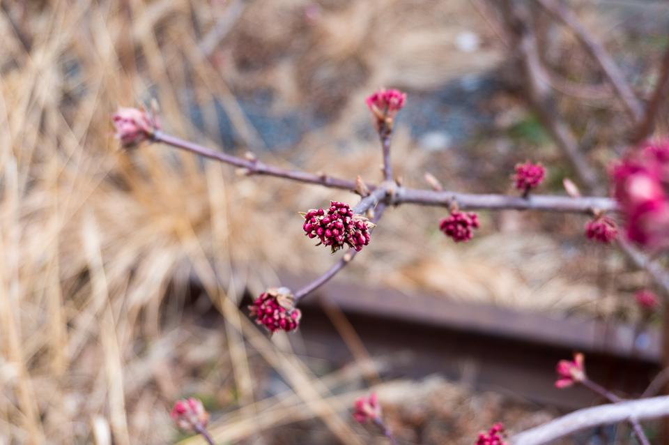 線路に沿って歩きながら、さまざまな植物が楽しめる