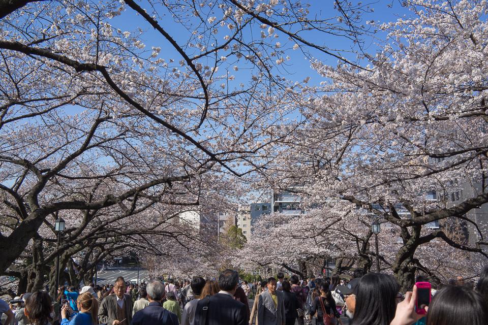 桜・桜・人・人・人...。(九段下)