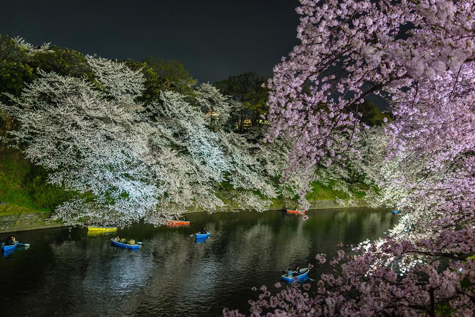 夜桜とボート