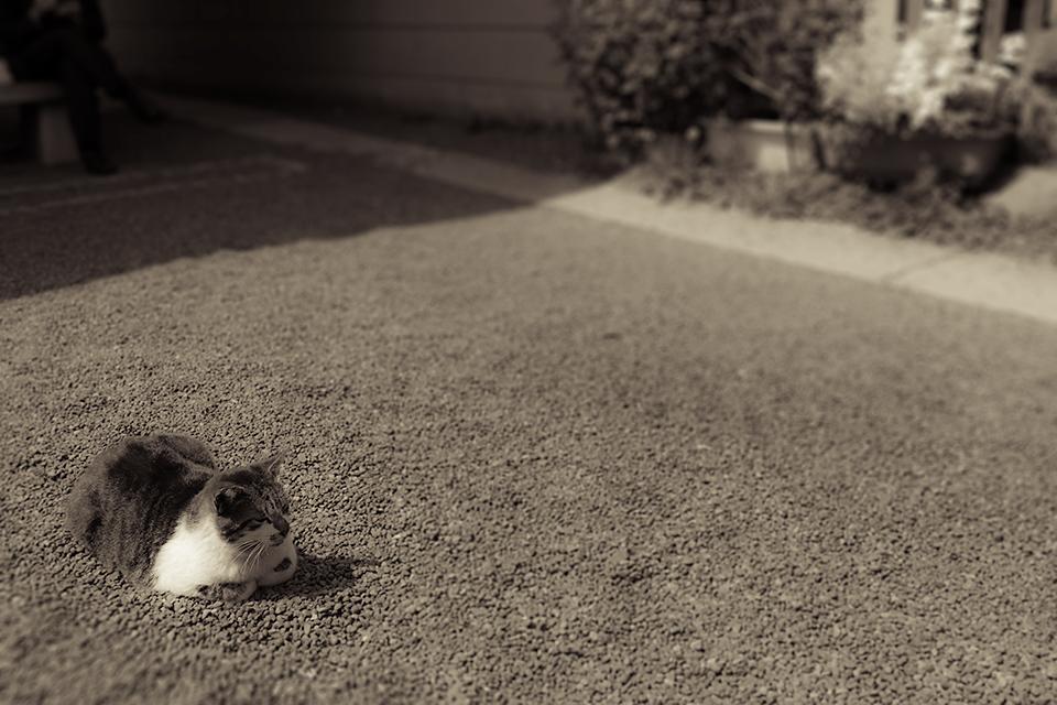 柳森神社のいつもの猫さん。