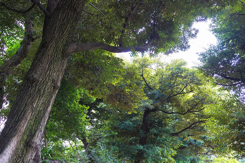 庭園内の木々。RX1で撮影