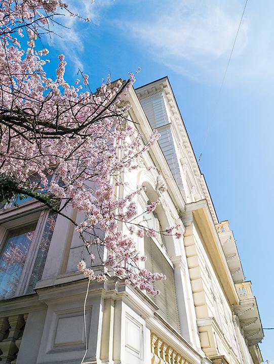 ザルツブルクも桜満開!