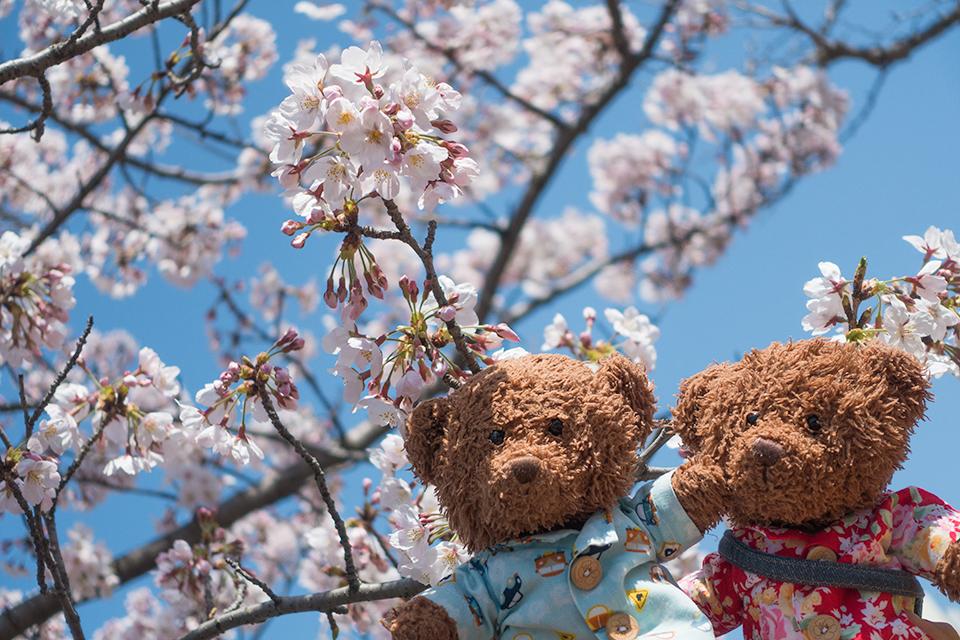 ビリジョニのお花見